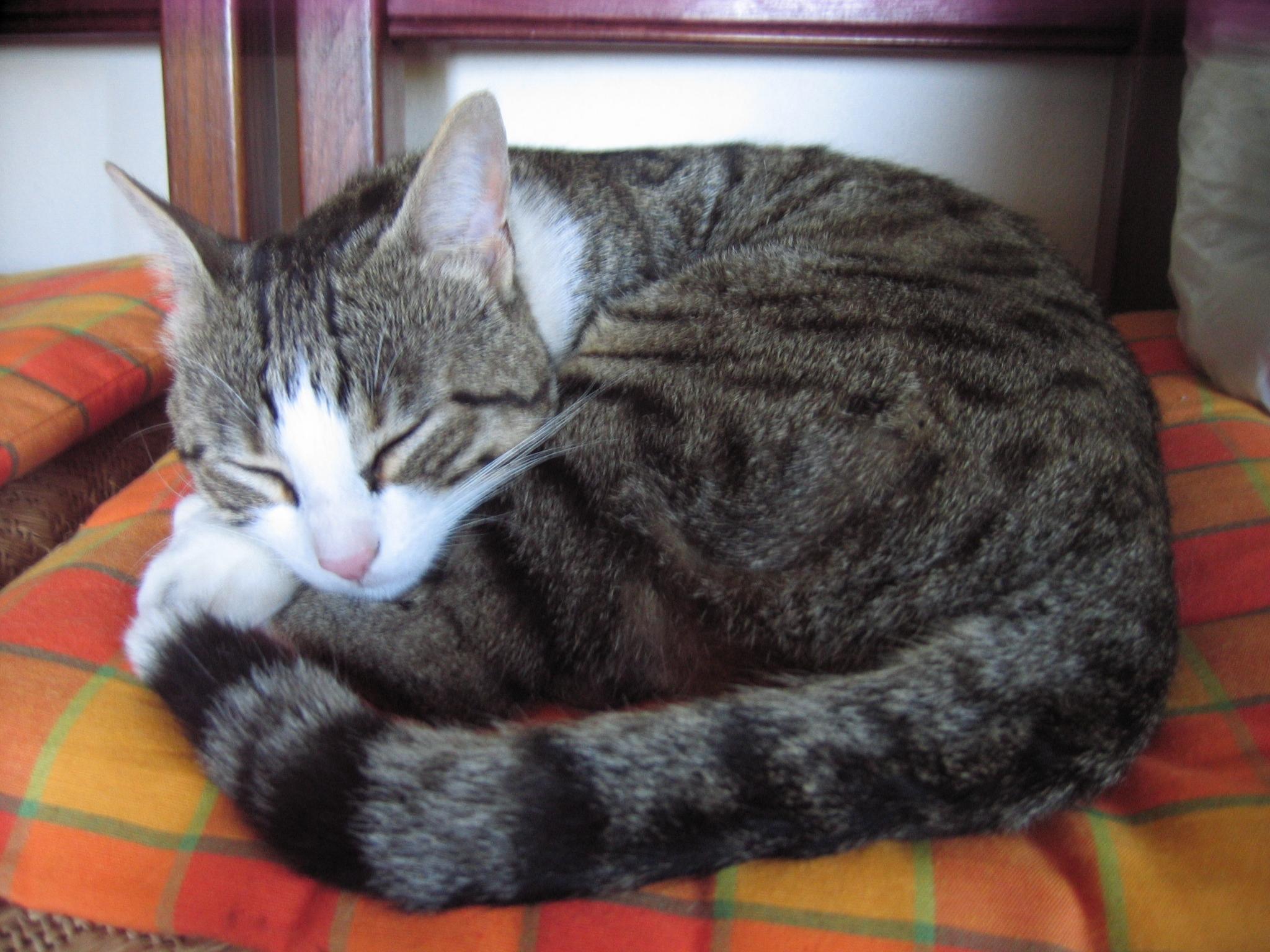 Perch i gatti sono dormiglioni video e fotogallery for Immagini gatti da colorare