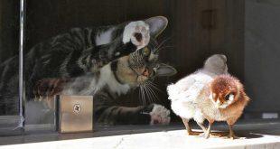 gatti uccelli