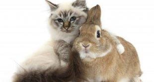 gatto coniglio