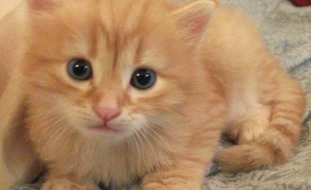 Gattino Si Perde E Viene Salvato Dalla Madre Video