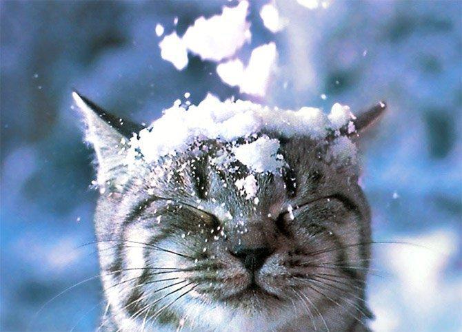Gatto Delle Nevi Usato Gatto-delle-nevi-usato