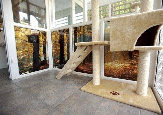 Apre a Parigi il primo albergo solo per gatti - Mondo Gatti, il blog a quattr...