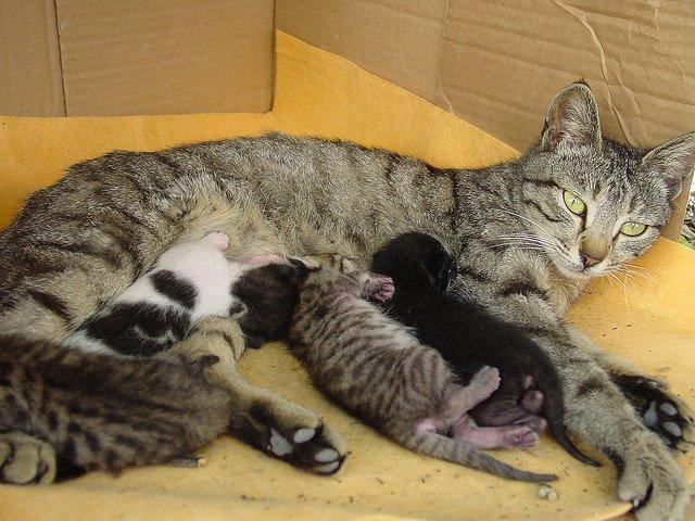 Feeding Kittens Natural Food