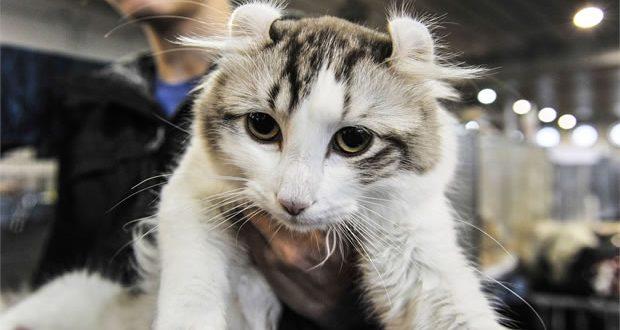 I gatti pi belli del mondo le foto dell expo felina di for I mobili piu belli del mondo