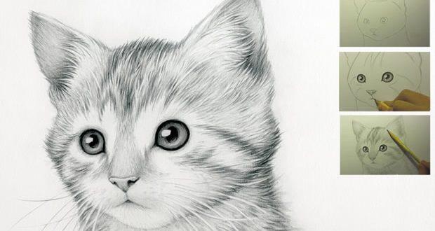 Come disegnare un gatto guida facile step by step video for Sito per disegnare