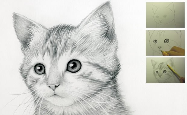 Come disegnare un gatto guida facile step by step video for Disegno gatto facile