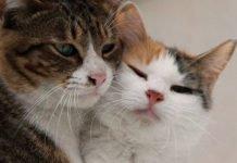 amore gatti
