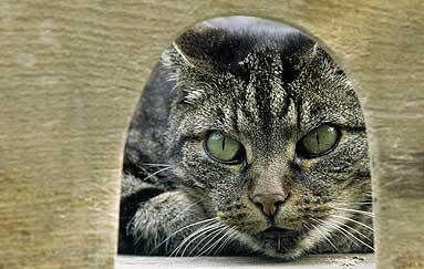 gatti-uomo