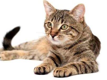 gatti-uomo1