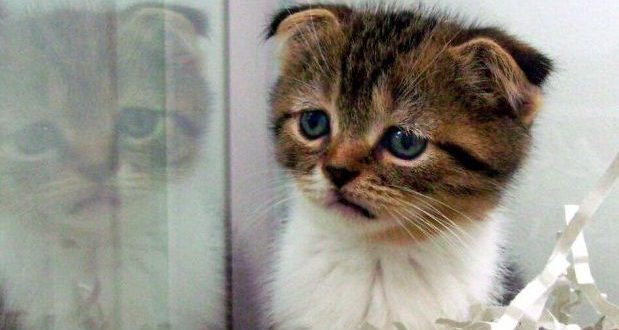 Malattie dei gatti cosa la fiv - Che malattie portano i gatti ...