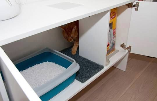 Lettiera per gatti che amano la privacy for Migliore lettiera per gatti