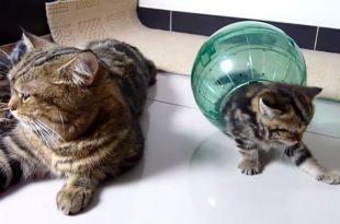 gatti in una sfera