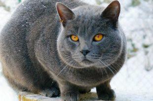 gatti uomo