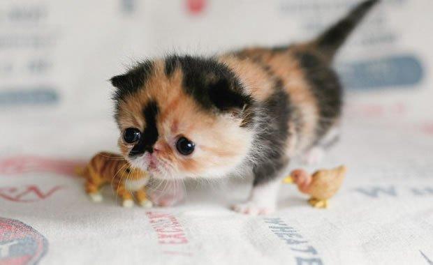 Non postare gatto, ce n'è un sacco Sul web impazza la micio mania ...