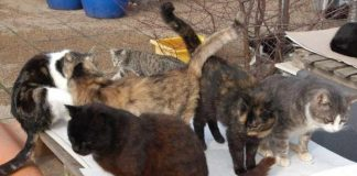 gatti salvati