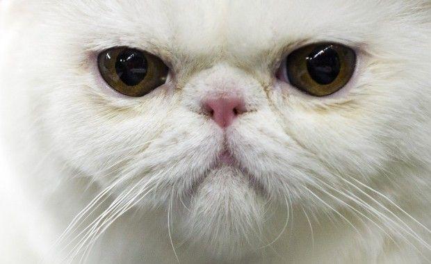 Ecco la differenza tra cani e gatti video for Migliore lettiera per gatti