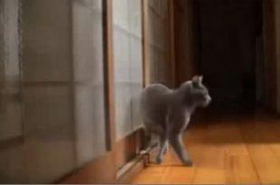 gatto che bussa