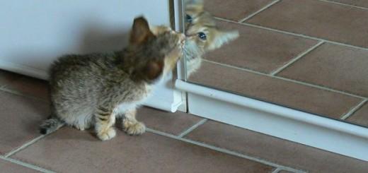 Specchio Sagomato Gatto Silvestro : Come disegnare un gatto guida facile step by video