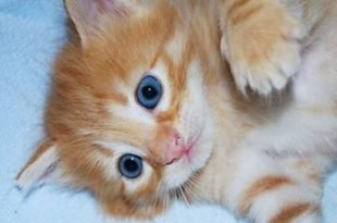 sterilizzazione gatto