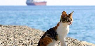 gatti al mare