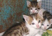 gattini abbandonati