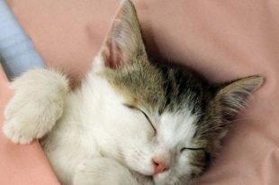 toccare un gattino