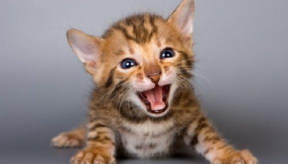Mondo Gatti, Il Blog A Quattro Zampe!