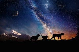 Le ceneri di cani e gatti nello spazio