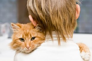 Una app per chiedere consiglio ad un team di veterinari