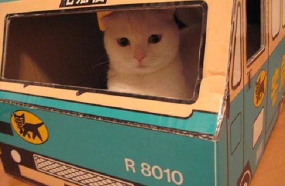 Viaggiare con un gatto documenti e trasportino