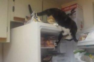 gatto ruba pesce