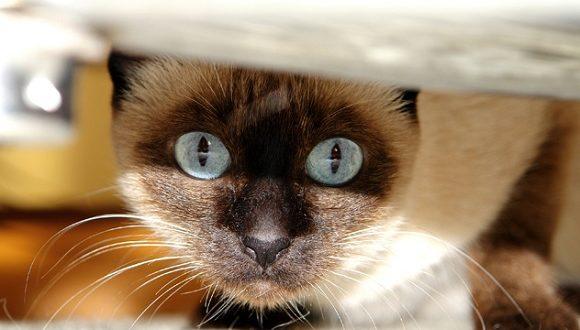 Cosa serve per un gatto lettiera e tiragraffi