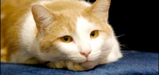 5 razze di gatto che pi si adattano alla convivenza con i - Eliminare odore pipi cane giardino ...