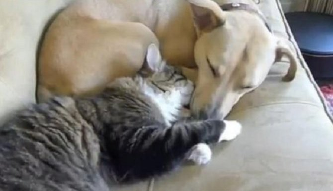 Gatti E Cani Dormono Insieme