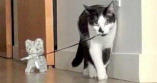 Gatti giocano con gattino pupazzetto - Da vedere!