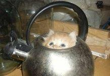 I rifugi dei gatti dove sono capaci di infilarsi per sentirsi sicuri