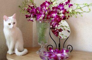 Le piante velenose per i gatti attenzione a tenerle in casa