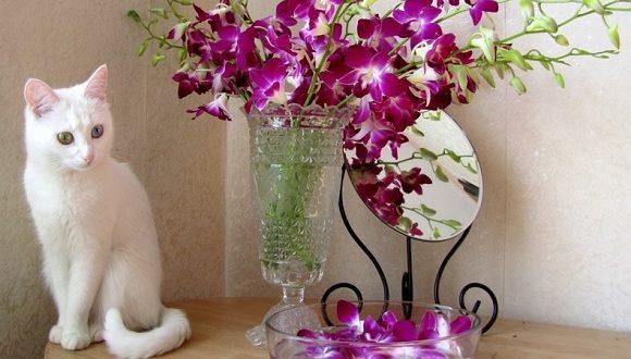 Le piante velenose per i gatti attenzione a tenerle in casa for Piante velenose per i gatti