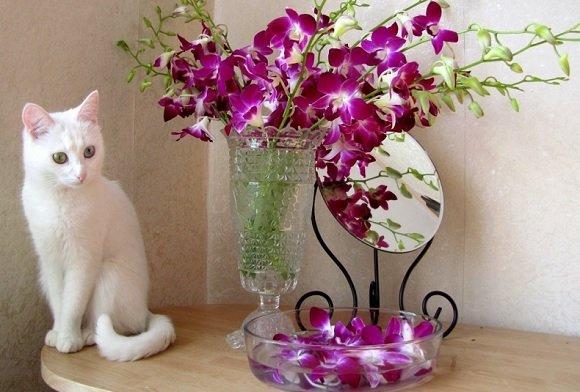 Le piante velenose per i gatti attenzione a tenerle in casa for Piante velenose per i cani