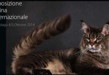 Milano-Cat-Show-appuntamento-con-expo-gatti