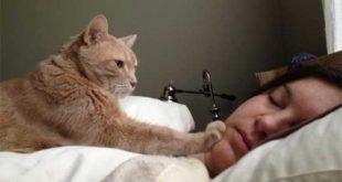 Sveglia! Tutte le sveglie dei gatti [Video]