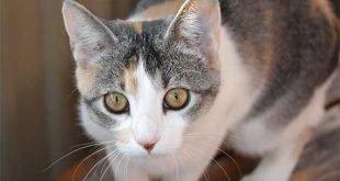 Apre a Milano il primo gatto-parco