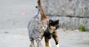 Colonie feline consigli per inverno