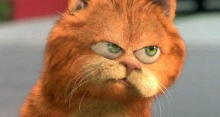 Gatti rossi ultima moda nel mondo del cinema