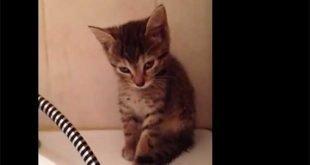 Gattino ha troppo sonno per stare in piedi