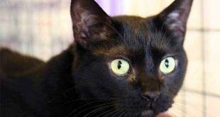 Halloween 30mila gatti neri uccisi ogni anno