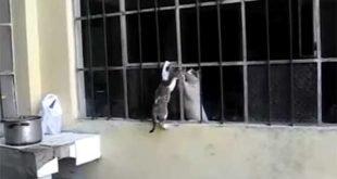 Mamma aiuta il cucciolo a venire da lei