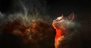 Sognare un gatto o sognare tanti gatti che significa