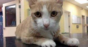 Un gatto in fin di vita salvato da una trasfusione di un cane