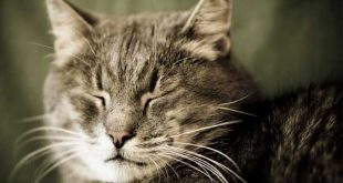 calcolare-eta-del-gatto